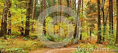 Percorso nella foresta mixed di autunno