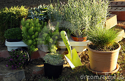 Perenial and herbs planting