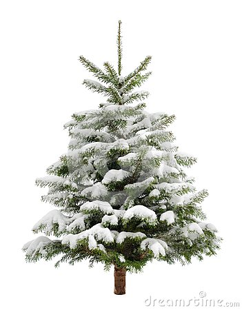 Free Perfect Little Christmas Tree In Snow Royalty Free Stock Photography - 34258687