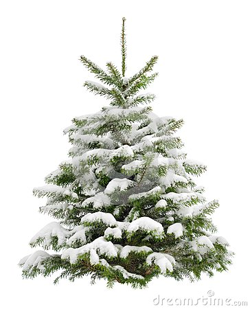 Free Perfect Little Christmas Tree In Snow Stock Image - 35624201