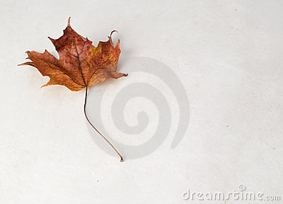 The Perfect Maple Leaf