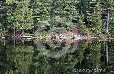 Perfect Algonquin Reflection