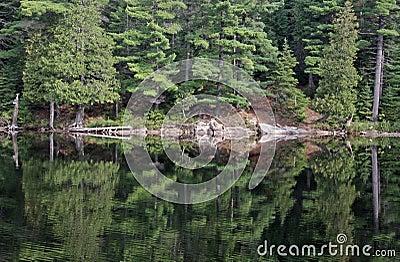 Perfect Algonquin Reflection