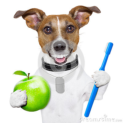 Free Perfect Smile Dog Royalty Free Stock Photography - 31980987