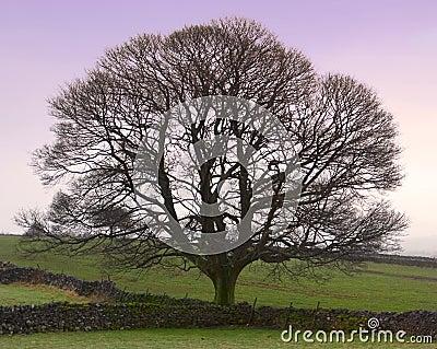 Perfect Tree - Winter