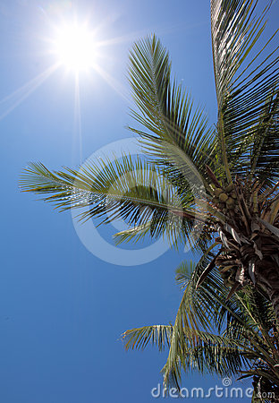 A perfect vacation with sun and coconuts