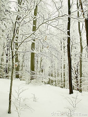 Perfect winter forest scenery