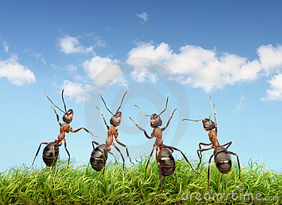 Perfect work team concept, ants under blue sky