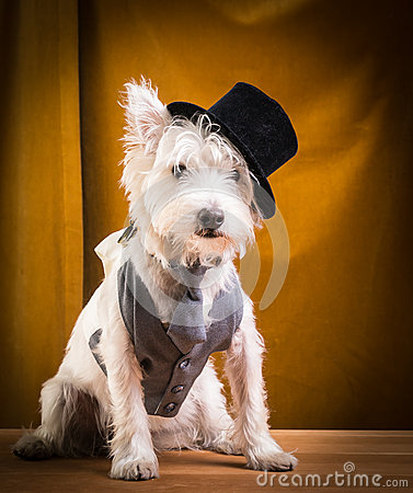 Performer Dog in Top Hat on Stage