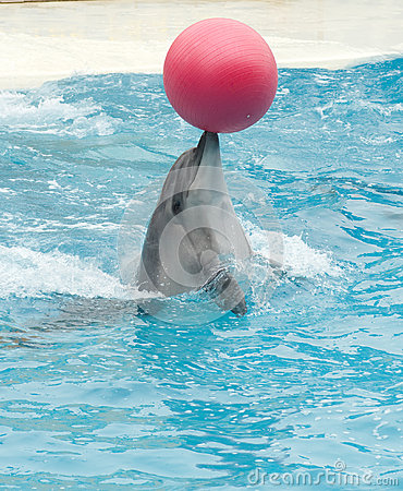 Performing dolphin with red ball
