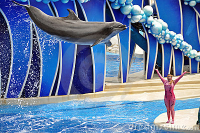 Performing Dolphin and Trainer Editorial Photo