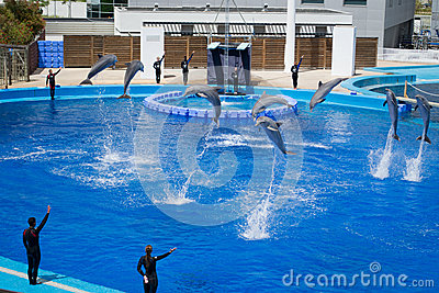 Performing Dolphin and Trainer. Valencia park Editorial Stock Photo