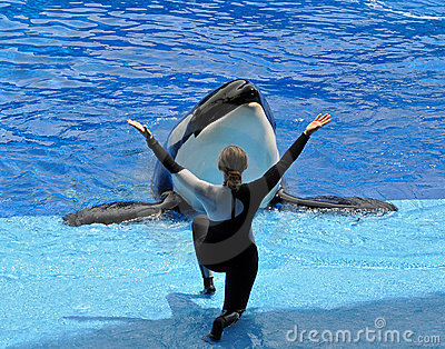 Performing Killer Whale (Orca) and Trainer Editorial Photography