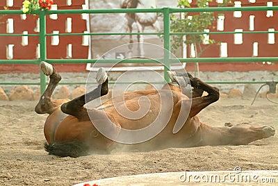 Performing Spanish horse