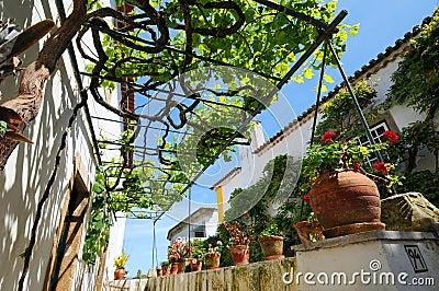 Pergola and grapevine