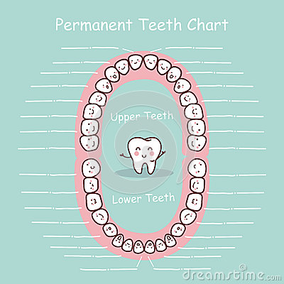 Free Permanent Tooth Chart Record Royalty Free Stock Photos - 65474788