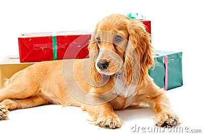 Perrito y regalos