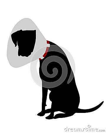 Perro con la gallineta de collar