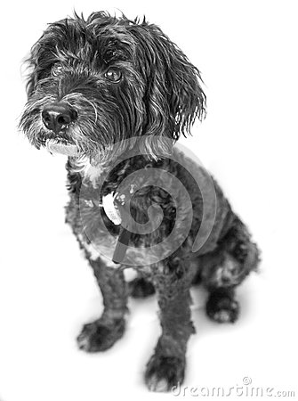 Perro de animal doméstico lindo