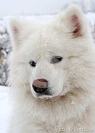Perro de la nieve