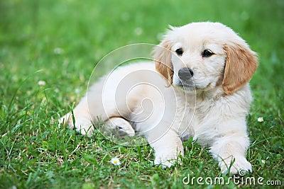 Perro de perrito en hierba