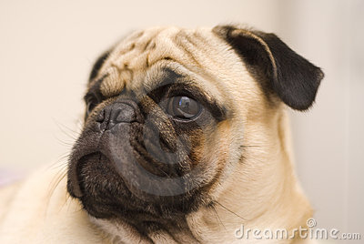 Perro del barro amasado