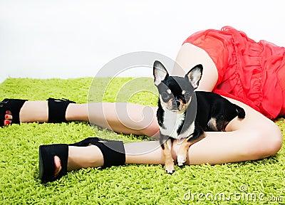 Perro divertido bastante pequeño que se sienta en pies de la mujer