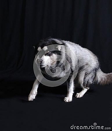 Perro en el vagabundeo