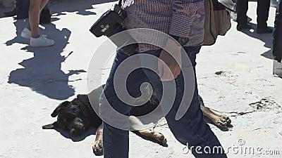 Perro perdido de la acrópolis almacen de metraje de vídeo