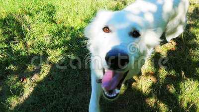 Perro que corre en hierba