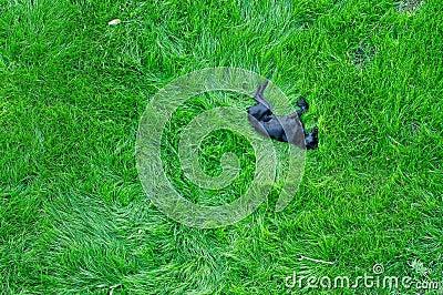 Perro que duerme en hierba verde