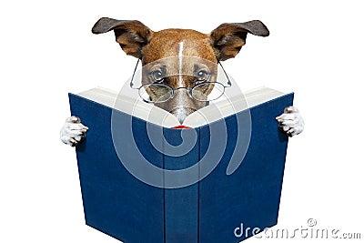 Perro que lee un libro
