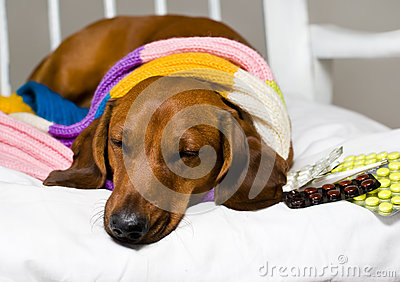 Perro y droga