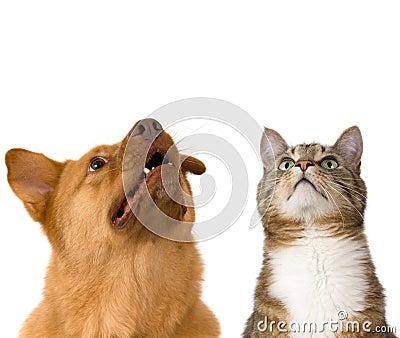 Perro y gato que miran para arriba