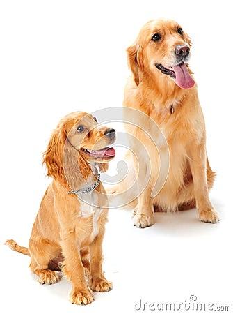 Perro y perrito