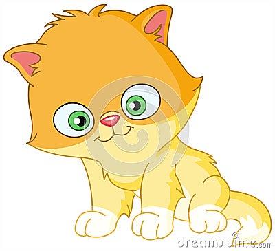 Free Persian Kitten Stock Image - 14383001