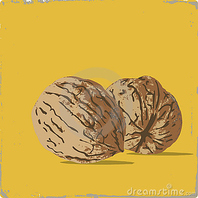 Persian walnut