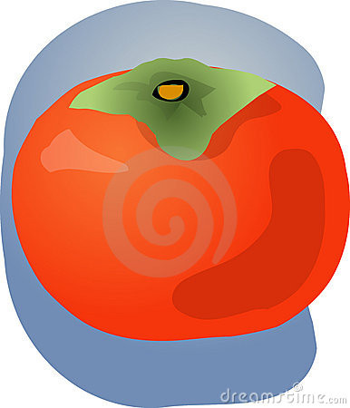 Persimmon fruit illustration