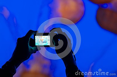 Person photographing jelly fish