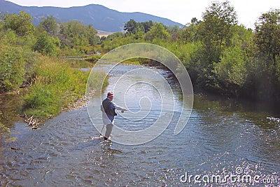 Pesca de mosca no Gallatin do leste