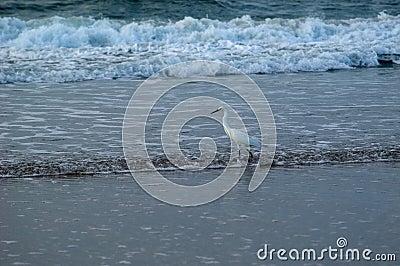 Pesca de ressaca do pássaro