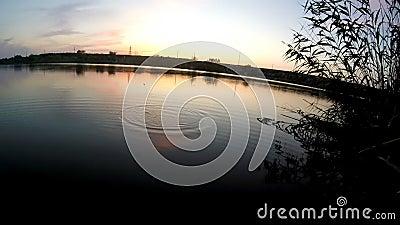 Pesca di sera archivi video