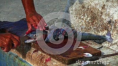 Pescador que corta pescados en el puerto deportivo almacen de video