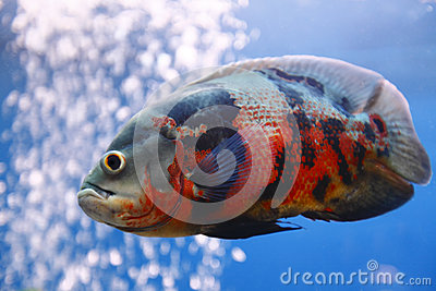 Pescados de Óscar