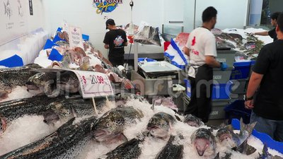 Pescados frescos en venta en Sydney Fish Markets, Australia almacen de video