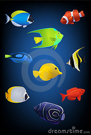 Pescados tropicales coloridos