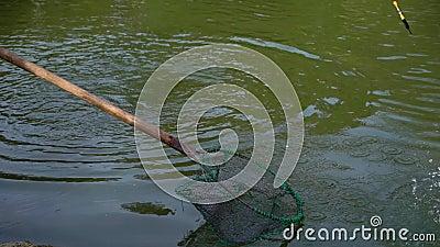 Pesce in stagno e nella pesca video d archivio