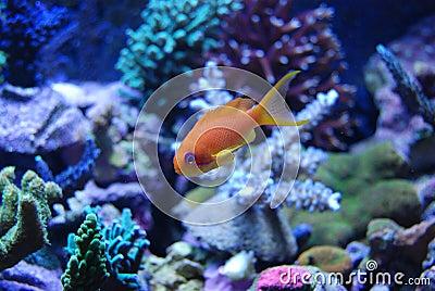 pesci di colore giallo dell 39 acqua salata fotografia stock