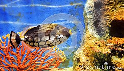 Pesci di mare tropicali immagine stock immagine 16844391 for Pesci per acquario tropicale