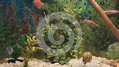 Pesci e piante nell'acquario stock footage